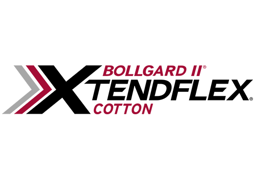 Bollgard II Xtendflex Cotton